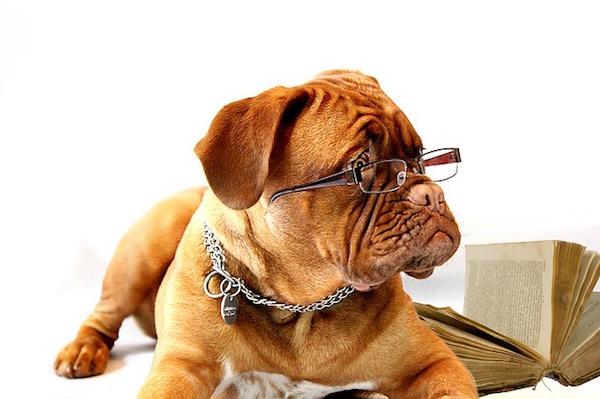 メガネをかけている犬