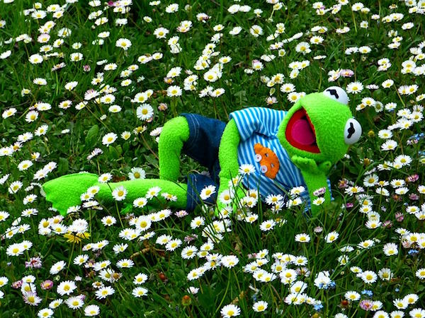 横たわっているカエル