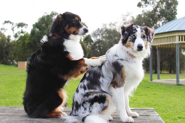 マッサージをしている犬